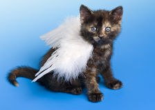Kitten with white angel's wing stock photography