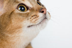 The kitten on a white background. With interest looks Stock Photography