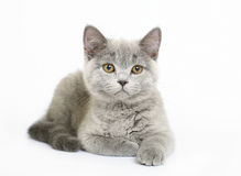 Kitten on white background Stock Photo