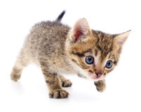 Kitten on white background. Stock Photos