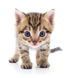Kitten on white background. Stock Image