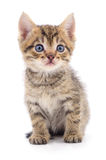 Kitten on white background. Royalty Free Stock Image