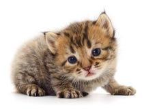 Kitten on white background. stock image