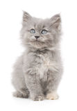 Kitten on a white background Stock Photos