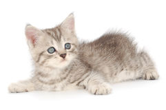 Kitten on a white background Stock Image