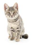Kitten on a white background Royalty Free Stock Photo