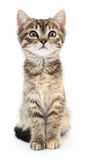 Kitten on a white background Royalty Free Stock Photos