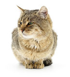Kitten on a white background Royalty Free Stock Images