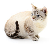 Kitten on a white background Royalty Free Stock Image