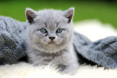 Kitten on white blanket Stock Images