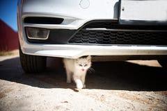 Little white kitten sitting under a white car royalty free stock photos
