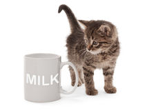 Kitten with white cup Stock Photography