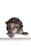 Kitten on white sign Stock Photo