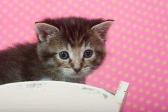 Kitten in white wheelbarrow Stock Photo