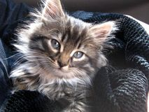 The kitten who found the house stock image
