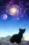 A kitten on a window. Looks at space. Fantastic wonderful picture vector illustration