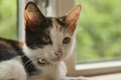 Kitten in a Window Royalty Free Stock Images