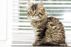 Kitten on a window sill Stock Photos