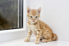 Kitten on a window sill Royalty Free Stock Photos