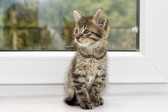 Kitten on a window sill Stock Image