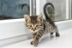 Kitten on a window sill Royalty Free Stock Photo