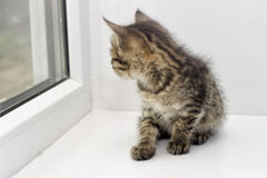 Kitten on a window sill Stock Photography