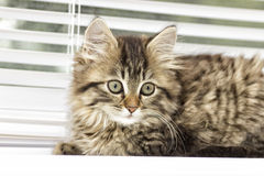 Kitten on a window sill Royalty Free Stock Photography