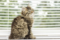Kitten on a window sill Stock Images