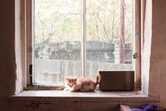 Kitten on the windowsill Stock Photo