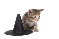 Kitten and witch hat Royalty Free Stock Images