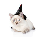 Kitten with witch hat for halloween. isolated on white background Stock Photography
