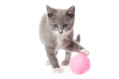 Free Kitten With A Ball Of Yarn Stock Images - 34006154
