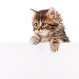 Kitten With Blank Stock Image
