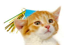 Kitten With Hat Stock Photo