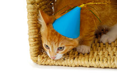 Kitten With Hat Royalty Free Stock Images