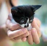 Kitten. Royalty Free Stock Image