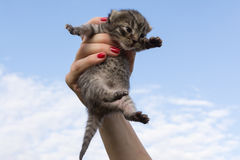 Kitten in the woman's palm Royalty Free Stock Image