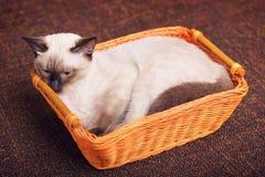 Kitten In Wooden Basket thaïlandaise images libres de droits