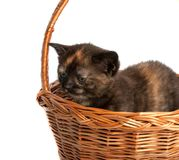 Kitten in a wooden basket stock photos