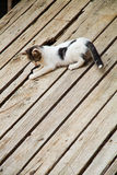 Kitten on wooden boards Stock Images