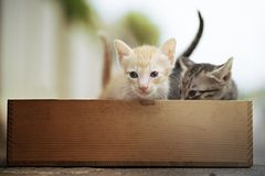 Kitten in wooden box   look at camera. Cute tabby kittens  in wooden box Stock Images