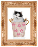 Kitten in wooden bucket in the classic frame Stock Photos