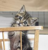 Kitten in a wooden crib Royalty Free Stock Images