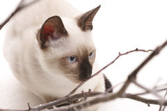Kitten and wooden sticks Stock Images