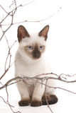 Kitten and wooden sticks Stock Photos
