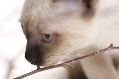Kitten and wooden sticks Royalty Free Stock Images