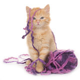 Kitten with wool ball Royalty Free Stock Photography