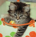 Kitten in woven basket Stock Photography
