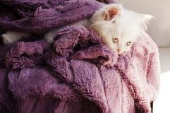 Kitten wrapped in blanket Stock Photos