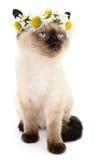 Kitten in a wreath Royalty Free Stock Image